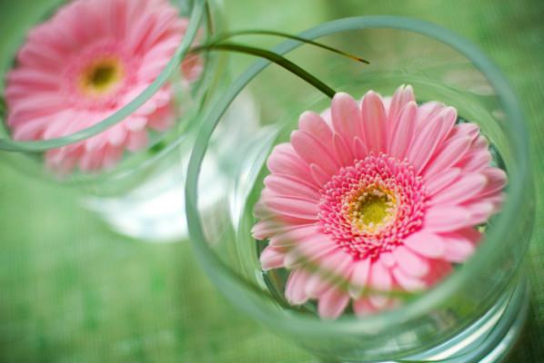 Gerbera daisys in cup