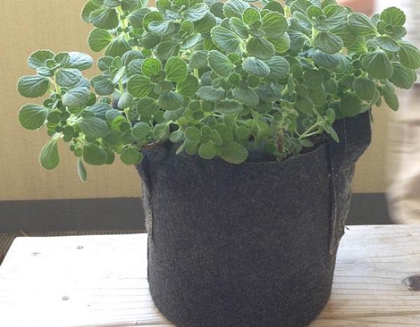 植物が元気に育つ 通気性、排水性に優れているので植物の発育に適しています。容量が大きめのものは土がたっぷり入るので植木や果樹、野菜作りにも最適です◎