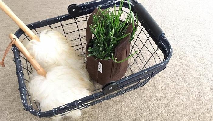 鉢カバーとして 直接土を入れて鉢としてはもちろん、鉢カバーとしても使えます。とりあえず買ってきた植物もこれにぽんと入れるだけでも可愛いですよ。