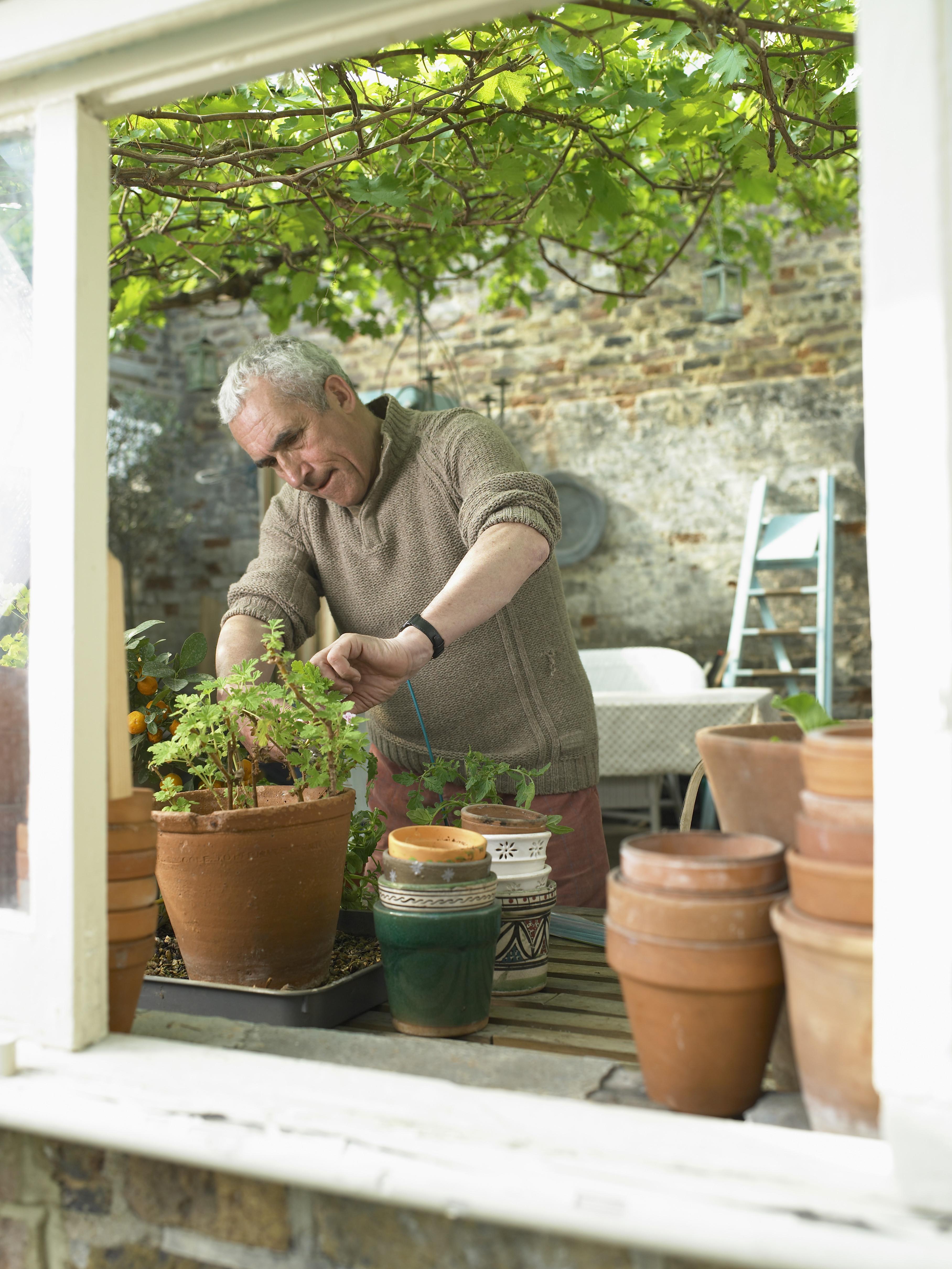Senior man tending plants in greenhouse, view through window