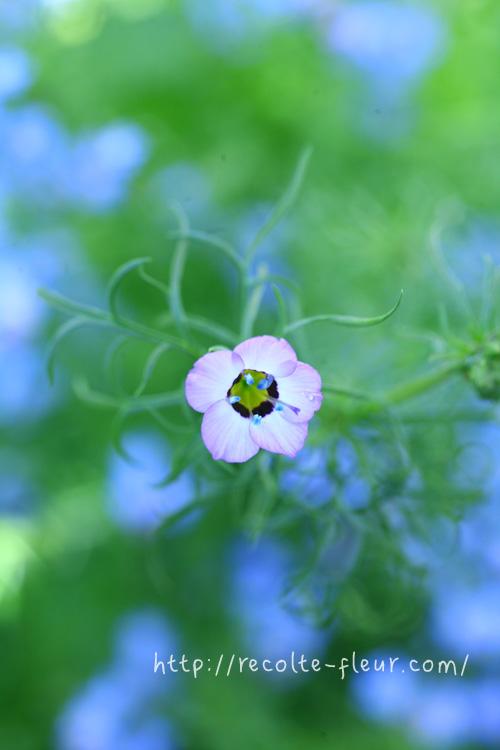 一番花。何度経験してもワクワクする瞬間。