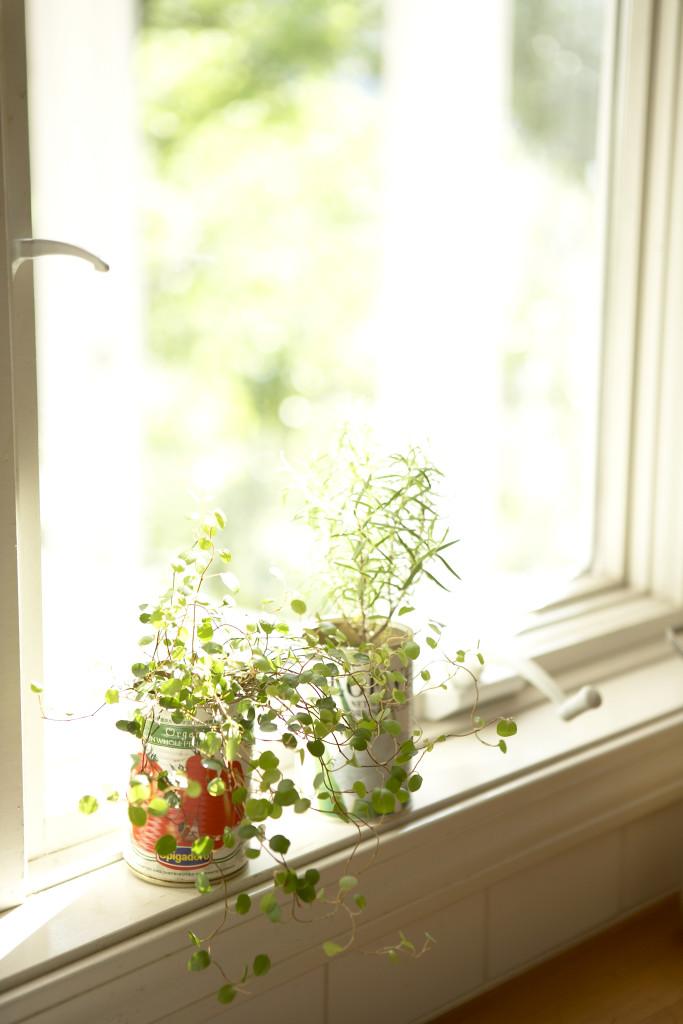 ただ空気がこもったり、湿気が苦手なので日中に窓を開けて換気をしましょう。風通しをよくすることは病害虫対策にもなります。