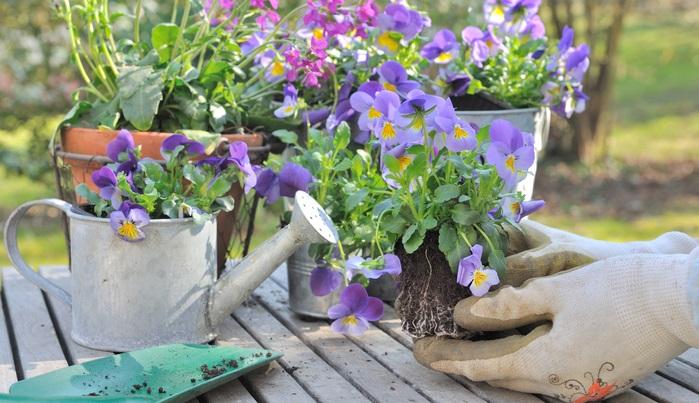 しっかりと液体肥料を与えたにもかかわらず、状況が改善しないときは根が栄養を吸収できない根詰まりの状況にあると判断しましょう。黒ずんで古くなった根をカットし、少し先の方の根を切り取り、一回り大きな鉢に植え替えましょ