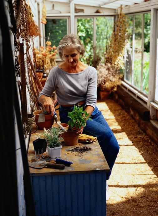 暖かい時期にぐんぐん伸びていくアロマティカス。冬を乗り越えて、暖かい春が来たら、植え替えをしましょう。上が伸びているということは根も伸びています。根が鉢の中パンパンだと、水を吸えなくなってしまいます。梅雨前のからっとしている時期が植え替えの適期です。新しい土に植え替えましょう。