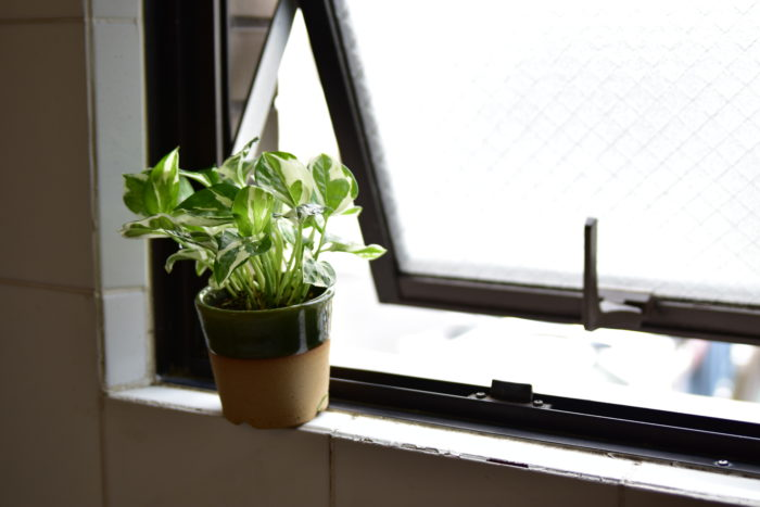 植物には耐陰性というものがあります。これは日光不足に耐える性質のことで、耐陰性の高い植物もいれば低い植物もあります。  耐陰性の高い植物は少し暗めの場所でも管理することが出来ますが、日光が嫌いという訳ではありません。そのため、健康な状態を維持するには出来るだけ日当たりのいい場所に置いたり、定期的に日光浴させることが必要です。