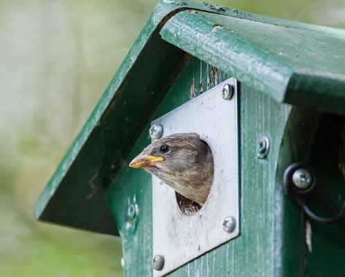 どんな鳥が遊びに来てくれるのでしょうか? 地域によって異なりますがシジュウカラやスズメ、ムクドリなどが一般的なようです。スズメは庭の害虫を食べてくれるらしいです◎自分が設置したバードハウスの入り口からひょっこり鳥が出てきたら最高ですよね。  バードハウスのサイズは入る鳥の大きさによって変わってきます。お家の周りでどんな小鳥が遊びにきているのかよく観察してから設置を計画しましょう。スペースがあればバードハウス+遊び場で鳥との距離が縮まりそうですね。海外ではこんなかわいいお客様が来ることも?! うらやましいです。