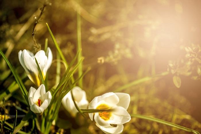 〜立春〜  二十四節気は太陽の動きをもとにしています。この二十四節気の始まりが立春。  立春以降初めて吹く南寄りの強風を「春一番」といい、暦の上ではもう春です。