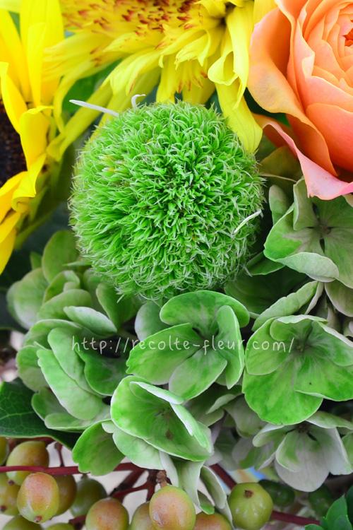 ガーベラ・ポコロコ  マリモのような形のガーベラです。花だけ見ると、とてもガーベラとは思えませんが、茎はガーベラそのもの。