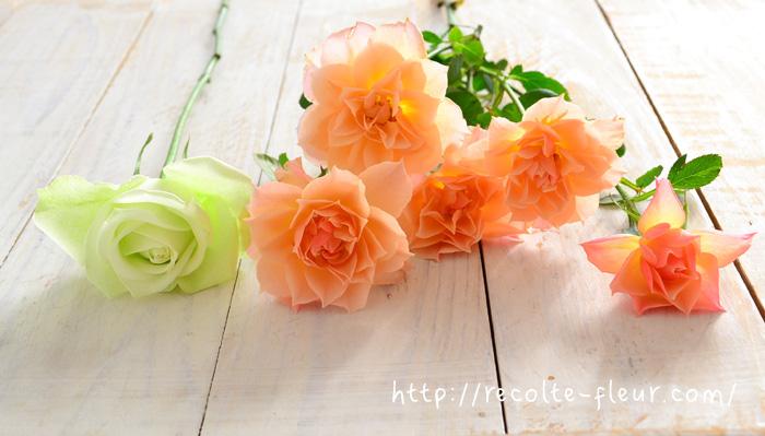バラは1本の茎に1つの花。これを専門用語でいうと「一茎一花」と言います。それに対してスプレーバラは、1本の茎に複数の花が咲いている形状のことを言います。 スプレーとは「枝分かれ」の意味で使われ、バラ以外でも、菊も「菊(マム)」と「スプレー菊(マム)」のように表現されます。