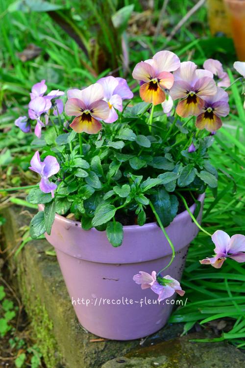 パンジーとビオラを1株で植えるなら、もともとのポット苗より、ひと回り大きい鉢を選びましょう。土は自分で配合するというやり方もありますが、ひと鉢だけなら花用の培養土として販売されているものがおすすめです。  今回はビオラの色とあわせた落ち着いたピンクの陶器の鉢を選んでみました。