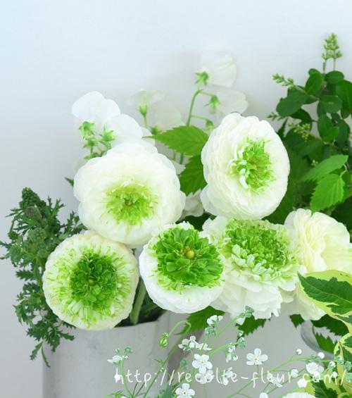 ラナンキュラスは、真っ白のものから写真のように中心がグリーンで外側が白のものなど、白系品種もたくさんあります。
