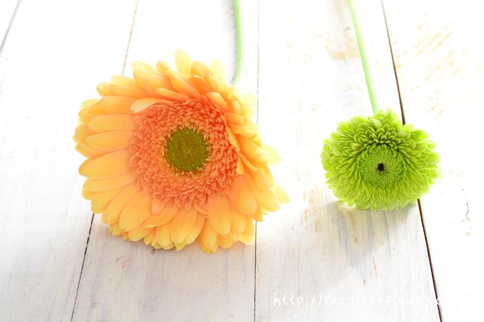 右が花屋さんでよく見かけるサイズですが、左のような大きなサイズもあります。測ってみたら、13㎝!大きなアレンジメントの中心に。1輪で生けてもかなりの迫力です。
