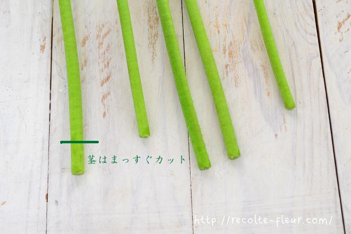 ガーベラは茎が空洞の花です。斜めに切ると切り口が腐りやすく水が汚れやすいので、茎はまっすぐカットします。
