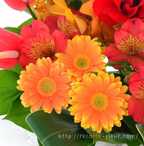 ガーベラは1年中出回っている花なので、花屋さんで色々な種類を探してみてくださいね。