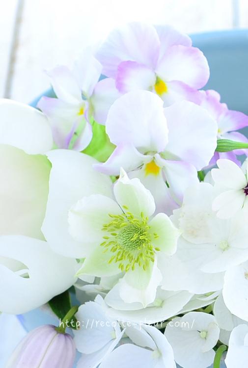 アネモネ・バージニアナの花のあと。実ものの状態でも流通しています。この実の状態になったらドライフラワーにもできます。
