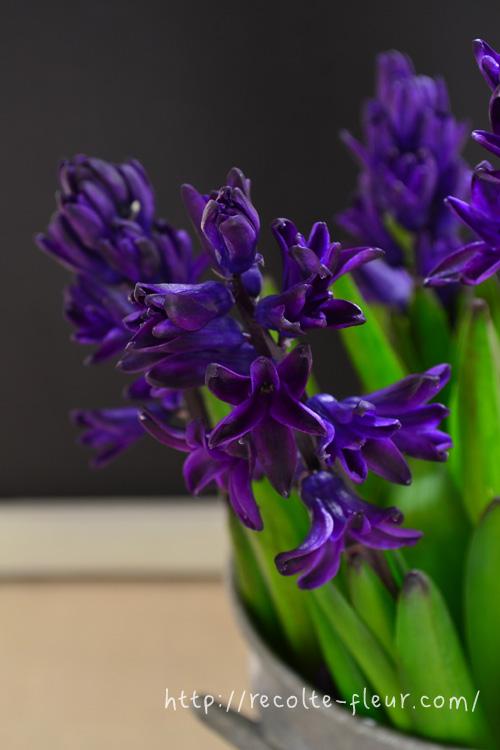 濃くて深い紫色です。