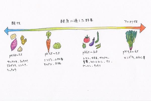 雨が多い日本では土の中の石灰(カルシウム)や苦土(マグネシウム)が流出してしまうため、とても酸性に傾きやすいといわれています。  しかも、ほとんどの野菜はpH6.0~6.5の弱酸性を好みますので、消石灰などを使用して酸性に傾いた土壌を改良する必要があるというわけです。