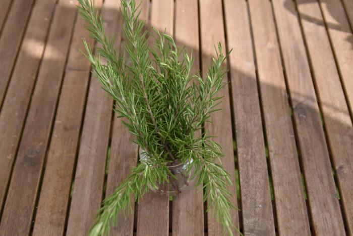 ローズマリーは地中海沿岸が原産のハーブです。香りがよく成長もはやいローズマリーですが、挿し木で簡単に増やすことが出来るんです。