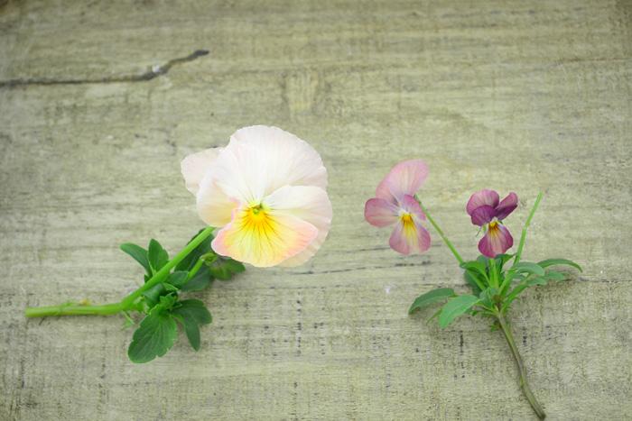 左・パンジー 右・ビオラ  パンジーとビオラの大きな違いは、花のサイズです。ビオラは3cm程度、それ以上大きなものはパンジーに分類されています。