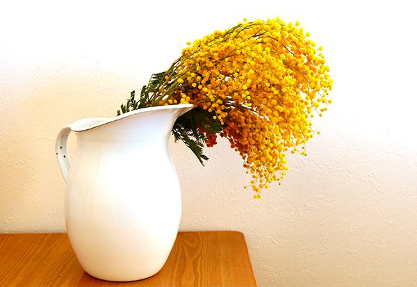 マメ科アカシア属の樹木です。2~4月ごろに小さな黄色いポンポンのような花が咲きます。花屋さんでは生花として並び、ドライフラワーやリースで楽しむことも♪ 庭木としてシンボルツリーなどにも人気です。3月8日はミモザの日と言われており、男性が女性にミモザの花を贈ることが習慣になっています。