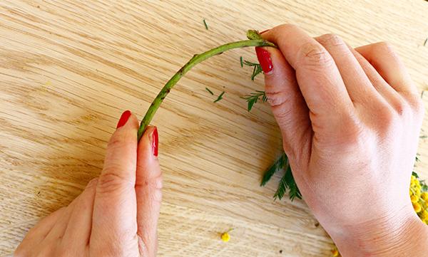 ⑤土台のミモザの茎を手でしならせてアーチ型にします。