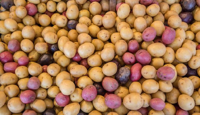 種イモといっても様々な種類がありますので、お好みのジャガイモの品種選びから始めましょう。  ・ホクホク系  男爵・出島など  ・煮崩れしずらい系  メークイン・インカのめざめなど  ・煮崩れしずらくホクホク系  キタアカリ・ホッカイコガネなど  ・紫・ピンク色ポテト系  シャドークイーン・ノーザンルビーなど