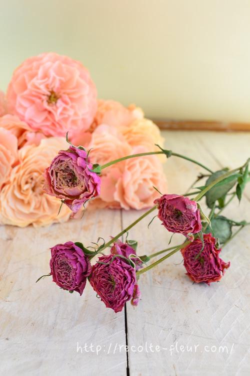 1~2週間で完成です!  写真奥のスプレーバラは、ドライフラワーにしている間、花瓶に生けておいたスプレーバラ。ドライフラワーにすると、花の直径は四分の一くらい、色も濃い目のピンクになりました。  同じ品種とは思えない色の変化です!  バラは、ドライフラワーにすると生花の時の色とは、まったく違う色に変化します。一般的には、生花の時より黒っぽい色になります。  例えば、赤いバラをドライフラワーにすると、黒っぽいバラになるので、赤いドライフラワーのバラにしたい時は、オレンジ色のバラを使うと赤っぽい色になります。  バラは色がかなり変化しますが、ドライフラワーにしてもほとんど色の変化がない花もあります。  (例・千日紅、ケイトウ、帝王貝細工、スターチス・・・など)