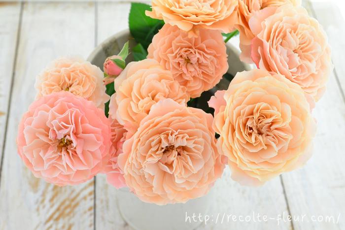 こちらは生けて1週間以上たった生花のスプレーバラ・リリカ。  生け始めより、優しい肌色のようなピンクになります。生花としてはきれいな色ですが、ドライフラワーにするのには遅すぎます!  どうしても生花で楽しんだ後に、ドライフラワーにしたくなりますが、バラが新鮮なうちに乾燥させるのが、きれいなバラのドライフラワーを作るコツです。