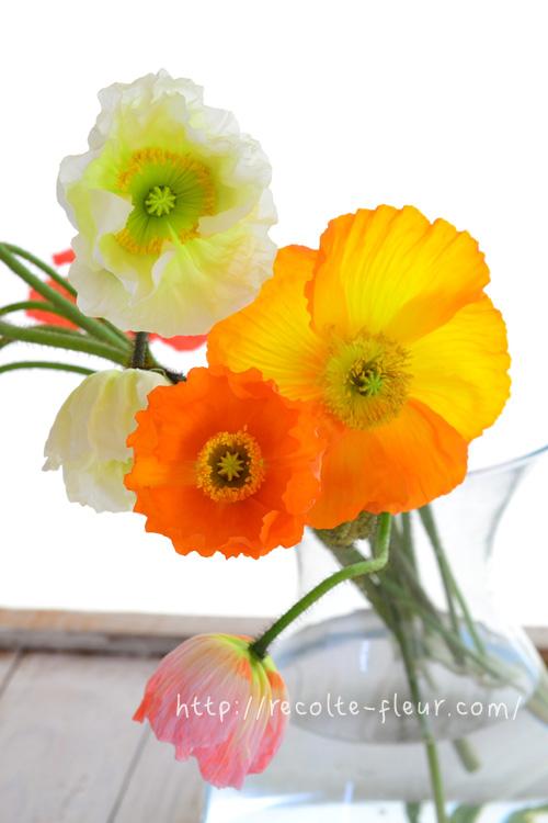 開花。ポピーは茎がくねくねとしているので、自由奔放にラフに生けるのが一番似合う生け方かもしれません。