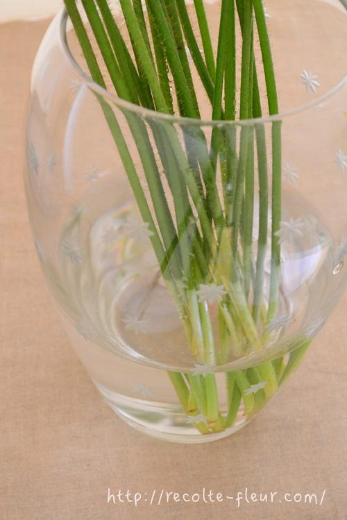 春の花に多いのですが、ポピーの茎はやわらかくて空洞なので、浅水で生けます。  浅水とは?  花瓶に少ない水で生けることを言います。茎がやわらかくて腐りやすい花は、茎が水に浸かっている部分が多いと、茎の途中が腐って折れてしまって、花は元気なのに給水できない状態になってしまいます。そのため、茎が水に浸かっている部分を少なくして生けます。これはどんな生け方でも共通することですが、お水はまめに取り替えて清潔を保ちましょう。