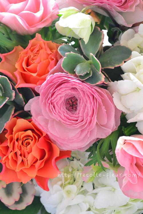 品種名は「コーニャ」。花びらの内側と外側が微妙に違います。
