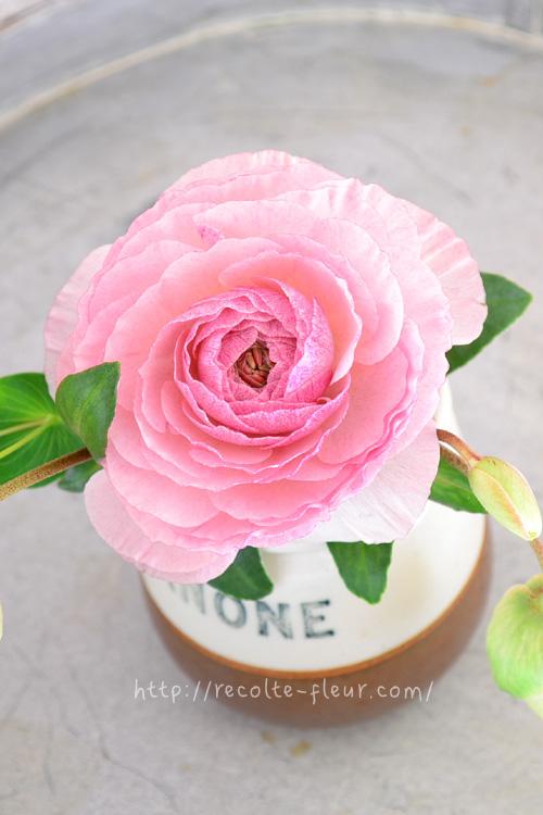 ラナンキュラスは、開いてくると花の重さに茎が負けて折れてしまうことがあります。少しずつ切り戻して、満開間際は丈を短くして生けると満開まで楽しめます。