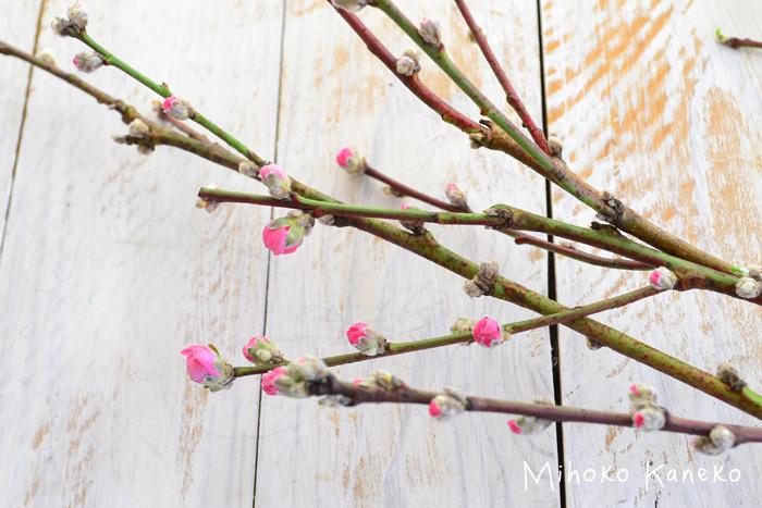 花びらがかさかさに乾燥していたり、黒ずんだピンク色のものは、寒さや風に当たって乾燥してしまっている可能性があるので、咲かずに落ちてしまうことがあります。