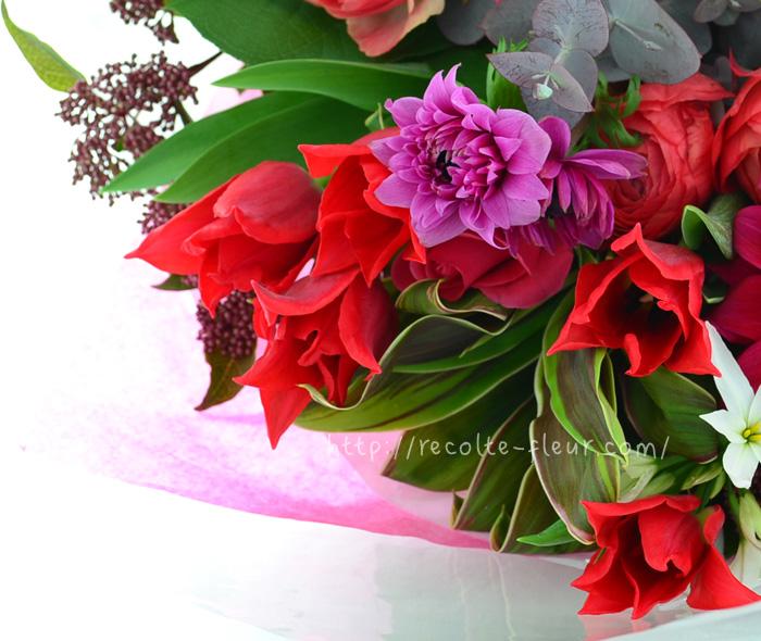 ユリのような咲き方、花びらがとがっています。普通のチューリップに比べると大人っぽい雰囲気です。