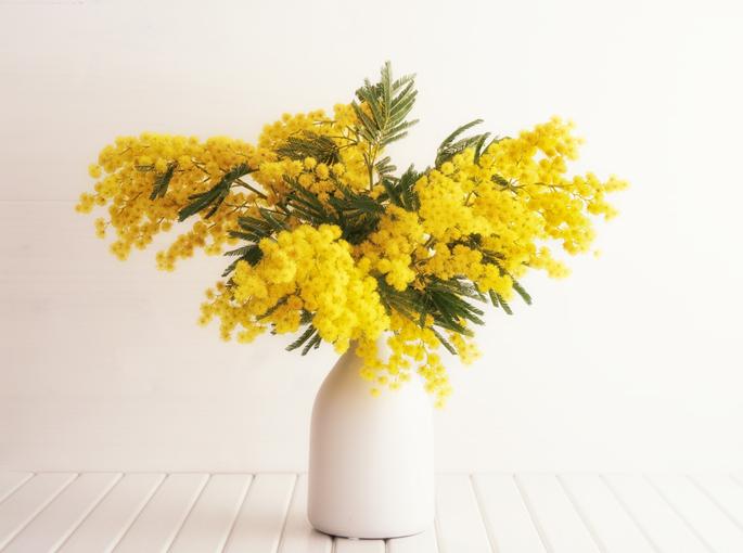 基本の飾り方ともいえる白い花瓶に鮮やかな黄色いミモザ飾りましょう。白い色がより黄色を引き立て、ミモザが鮮やかに浮かび上がります。