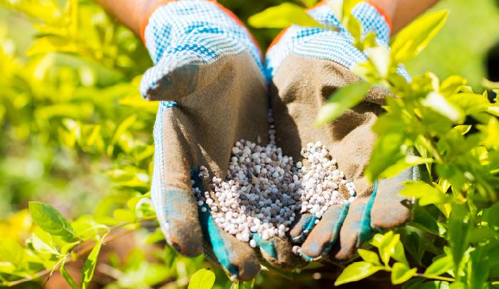 肥料とは、植物を生育させるために必要な栄養分を意味します。  肥料の三要素と呼ばれる成分は、窒素(N)・リン酸(P)・カリ(K)の3つ。他にカルシウム、マグネシウムを加えると肥料の五大要素となります。  窒素(N)の働き 主に植物を大きく生長させる作用があり、特に葉を大きくするため葉肥(はごえ)と言われています。過剰に与えると、植物体が徒長し、軟弱になるため病虫害に侵されやすくなります。  リン酸(P)の働き リン酸は、花肥(はなごえ)または実肥(みごえ)と言われ、その名の通り「花」や「トマト」などの実を肥やす働きがあります。  カリウム(K)の働き 主に根の発育に関係するため根肥(ねごえ)といわれます。