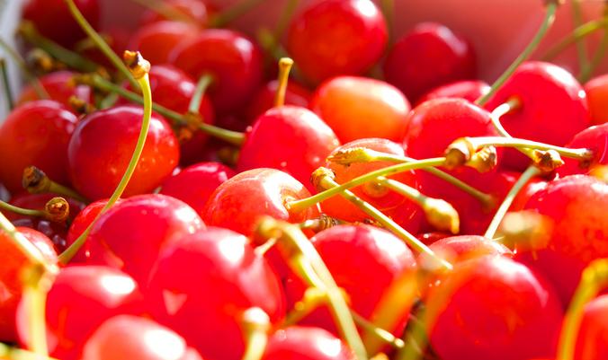 みなさんがよく耳にするサクランボの種類としては、佐藤錦(さとうにしき)が有名ですね。国内で最も多く生産されている品種で、ヨーロッパ各国で栽培されている品種ナポレオンとアメリカ原産の黄玉を交配してできたものです。名前は交配育成した山形県東根市の佐藤栄助さんに因んで名づけられました。  だんだんサクランボが食べたくなってきました。春になり桜色に染まった後は、真っ赤なサクランボを楽しみにしましょう。
