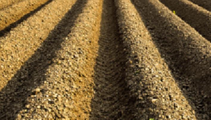 2. 通路を作りながら、作る数だけおおまかに畝の山をクワで作ります。