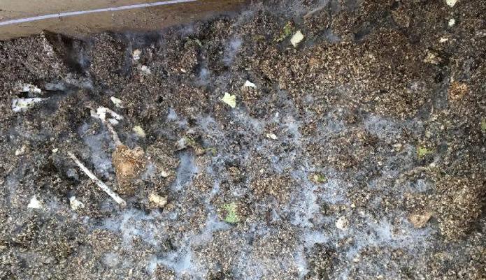 2月16日(12日間経過)  好気性菌といって無害な白いカビが出てきます。  野菜くずなどの生ゴミの投入を何日かさぼってしまったり、混ぜるのを辞めて放置すると、コバエやダニが発生しやすくなりますので、引き続きしっかりと新鮮な空気を入れ込んであげるように混ぜ合わせましょう。