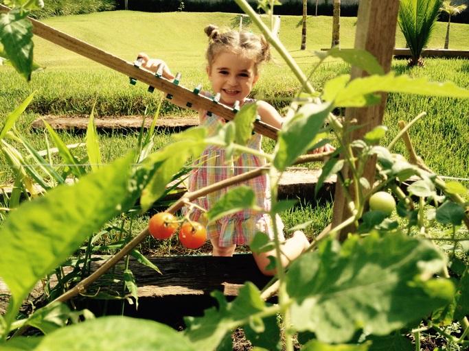 家庭菜園、コンパニオンプランツ