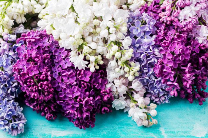 また、この3つのお花にライラックを加えて、四大フローラルという場合もあるようです。