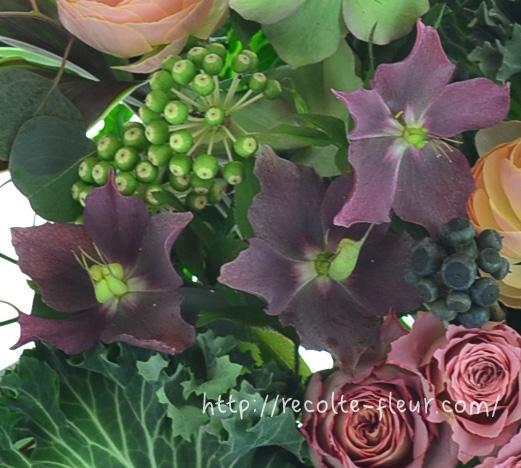 クリスマスという名前がついてますが、生花としての出回りは、春の花と一緒の季節のクリスマスローズ。年々、出回り品種が多くなってきました。写真のような深い紫やワインカラーなど、深い色合いも豊富です。