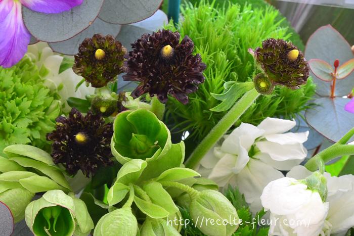 ラナンキュラス・イドリス  え、ラナンキュラス?と思ってしまうような通常のラナンキュラスとは一線を画した花姿です。  モロッコ系というちょっと変わった咲き方の系統のラナンキュラスです。その中でもラナンキュラス・イドリスは、花のサイズは小さいですが、印象的な色や咲き方。アレンジのアクセントとして。