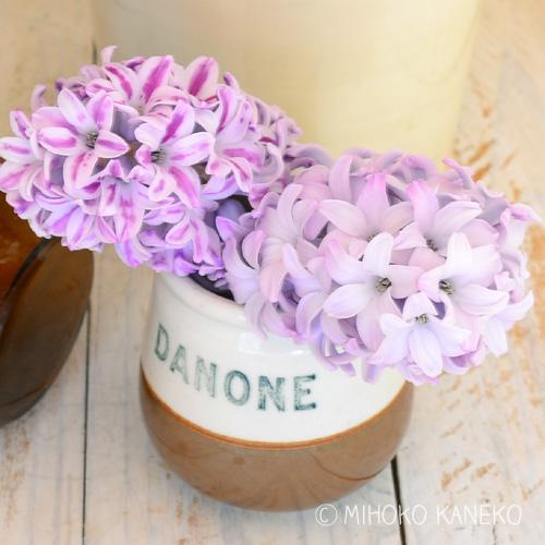 ヒヤシンスは、チューリップ同様、生花になってからも伸びます。とても重さのある花なので、ナチュラルスタイルに茎を見せて生けると、花の重みに耐えかねて、茎が折れてしまうことがあります。花瓶のフチで花を支えてあげるようにして生けると、茎が折れずに最後まで楽しめます。