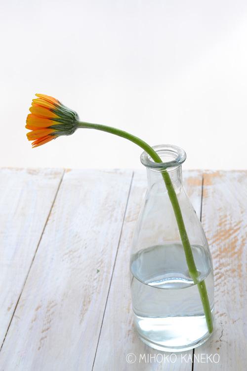 花びらが閉じ気味。触るとフニャフニャで柔らかく、花がうつむき気味。