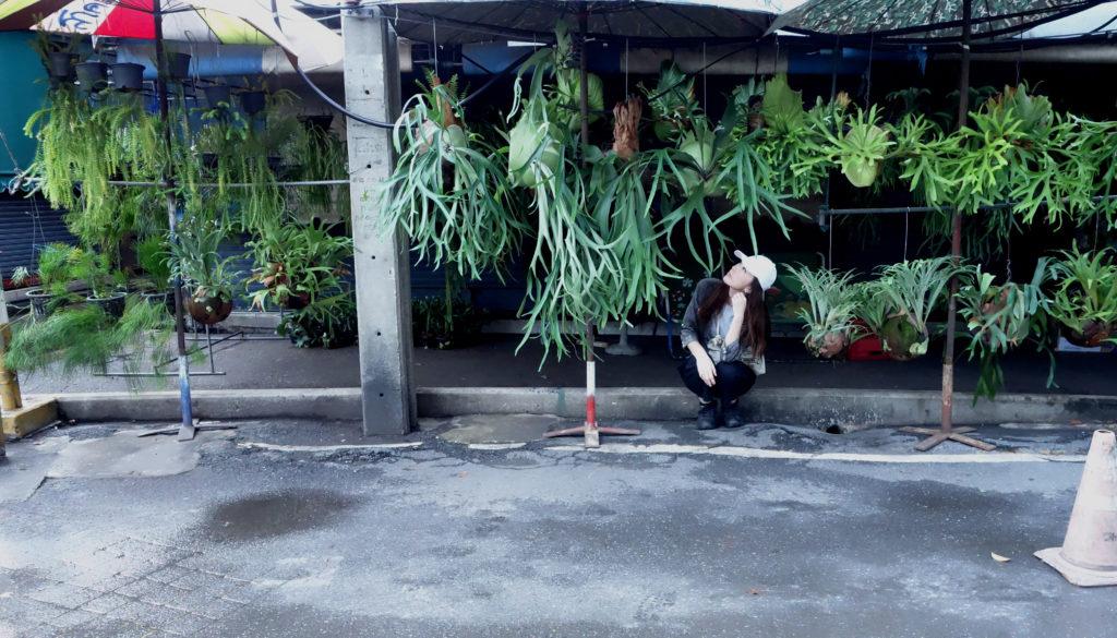 そして、今年の年明けにはタイへ行ってきました。  目的は、前から気になっていた場所  「チャトチャック植物市」。