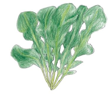 ゴマの香りが特徴のサラダにお勧めオリーブオイルと相性抜群です。