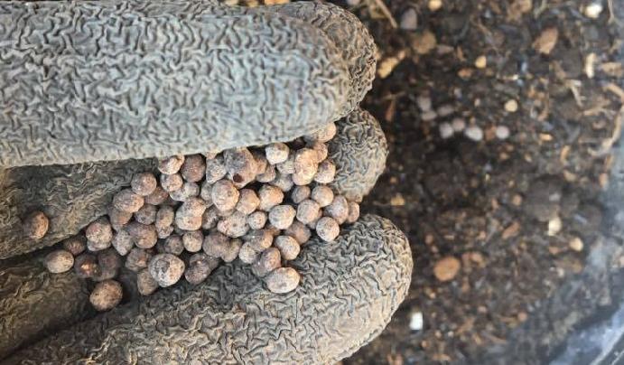 さほど特別な土を用意しなくても普通の培養土で大丈夫です。私が今回用意した土は、黒土・日向石(中粒)・アルカリ土壌に改良してくれるもみ殻くんたんです。肥料は有機肥料を原料にした顆粒状のものを用意しました。