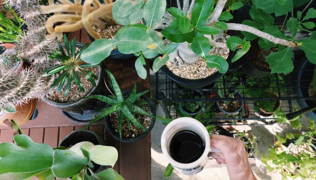 愛情をかけた分だけ、愛情を返してくれる。  そんな関係性がすごく心地よくて、自然と感謝の気持ちが生まれます。植物に教わることはまだまだ沢山ありますね。家での作業が主なので、気分転換したい時は植物を観察しながら、大好きなコーヒーを飲む。そんな時間が凄く好きです。あっという間に数時間過ぎてしまいますね。