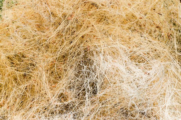 ヤシの実の繊維から作られています。インテリアショップの大きめの鉢の土部分にはこのココヤシファイバーがよく使われています。